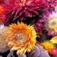 Seasonal wedding flower advice from a experienced florist